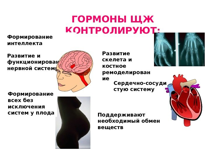 Болезни щитовидной железы диета