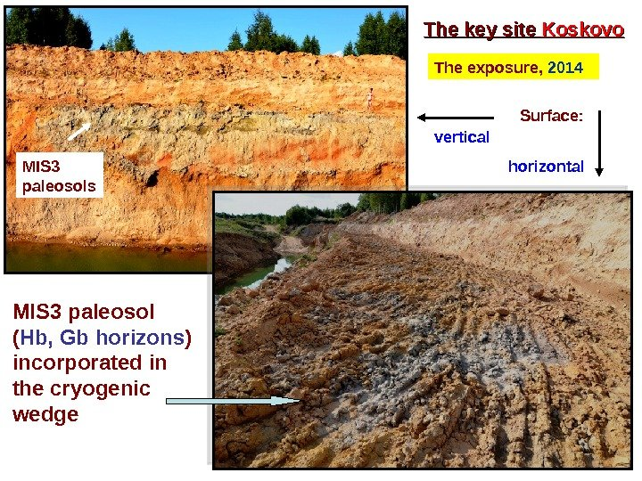 The key site Koskovo The  exposure,  2014 Surface:  vertical horizontal MIS 3 paleosols
