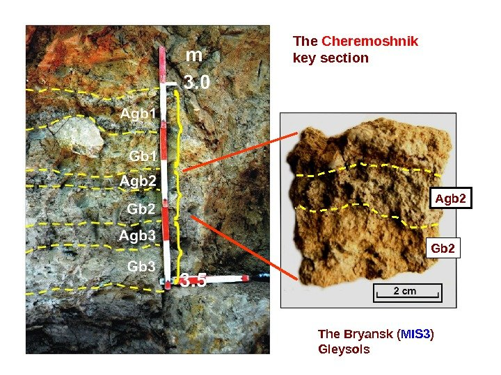The Cheremoshnik  key section Agb 2 Gb 2 The Bryansk ( MIS 3 ) Gleysols