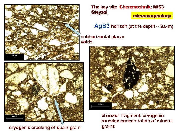 The key site  Cheremoshnik:  MIS 3 Gleysol micromorphology Ag. B 3 horizon (at the