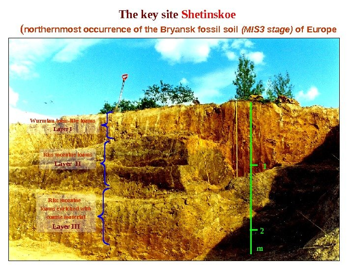The key site Shetinskoe ( northernmost occurrence of the Bryansk fossil soil (MIS 3 stage) of