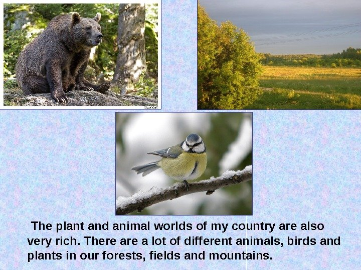 The plant and animal worlds of my country are also very rich. There a lot