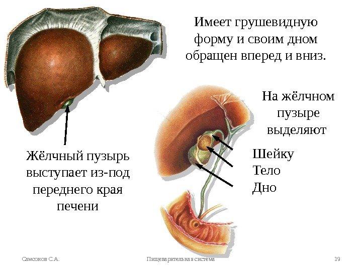 Диета для печени и желчного пузыря Цирроз печени - диета