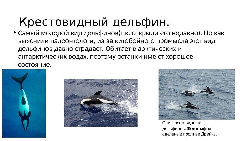 виды дельфинов список и фото души серьезно