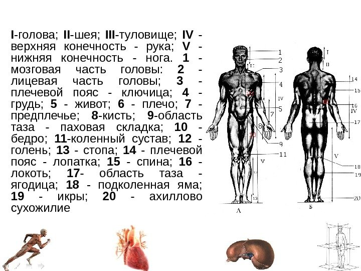 Верхняя часть ноги человека