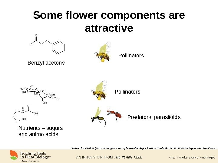 Benzyl acetone Some flower components are attractive Pollinators Nutrients – sugars and animo acids Pollinators Predators,