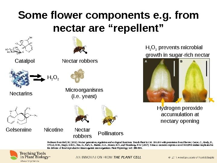 "Some flower components e. g. from nectar are ""repellent"" Catalpol Nectar robbers Nectarins Microorganisms (i. e."