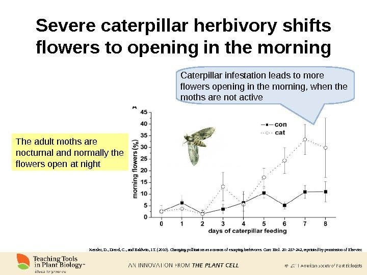 Severe caterpillar herbivory shifts flowers to opening in the morning The adult moths are nocturnal and