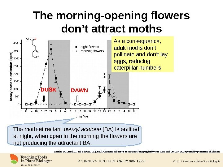 The morning-opening flowers don't attract moths Benzyl acetone As a consequence,  adult moths don't pollinate