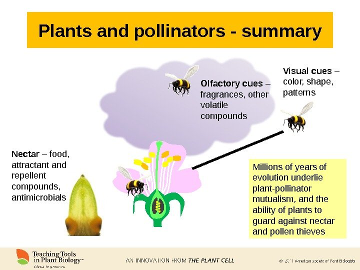 Plants and pollinators - summary Visual cues – color, shape,  patterns. Olfactory cues – fragrances,