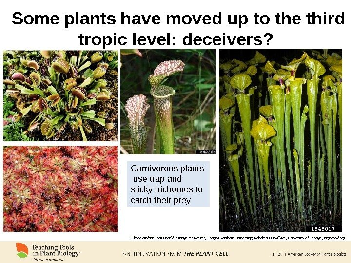 Some plants have moved up to the third tropic level: deceivers?  Photo credits: Tom Donald;