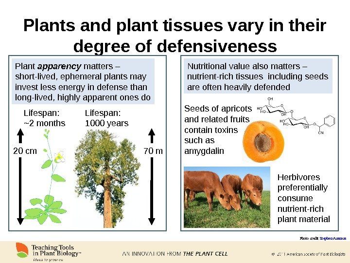 Plants and plant tissues vary in their degree of defensiveness Plant apparency matters – short-lived, ephemeral