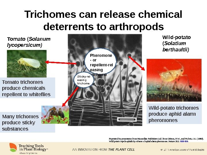 Trichomes can release chemical deterrents to arthropods Reprinted by permission from Macmillan Publishers Ltd. from Gibson,