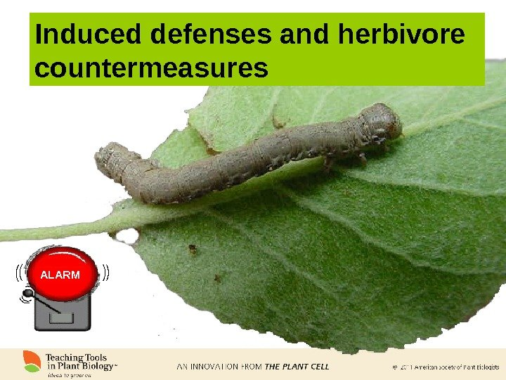 Induced defenses and herbivore countermeasures ALARM
