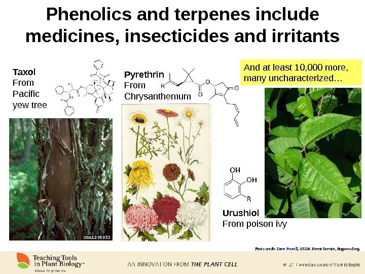 Phenolics and terpenes include medicines, insecticides and irritants And at least 10, 000 more,  many