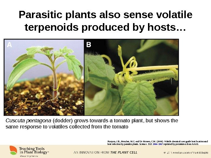 Parasitic plants also sense volatile terpenoids produced by hosts… Runyon, J. B. , Mescher, M. C.