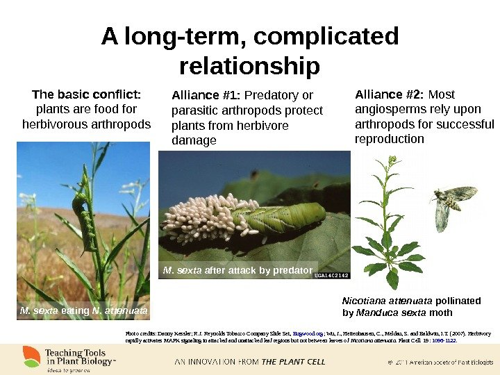 A long-term, complicated relationship M. sexta eating N. attenuata. The basic conflict:  plants are food