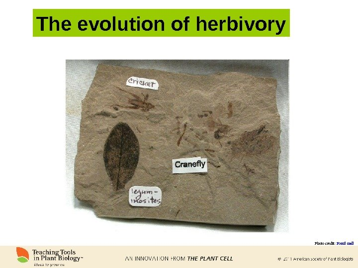 The evolution of herbivory Photo credit:  Fossil mall