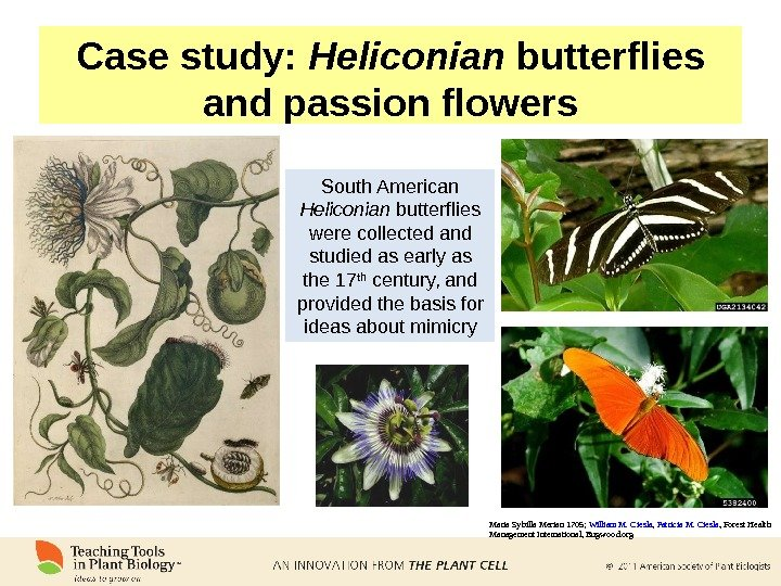 Case study:  Heliconian butterflies and passion flowers South American Heliconian butterflies were collected and studied