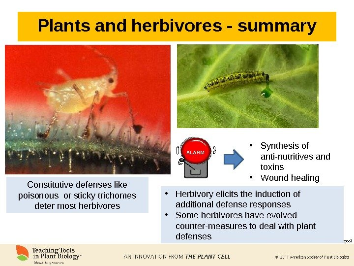 Plants and herbivores - summary Constitutive defenses like poisonous or sticky trichomes deter most herbivores Scott