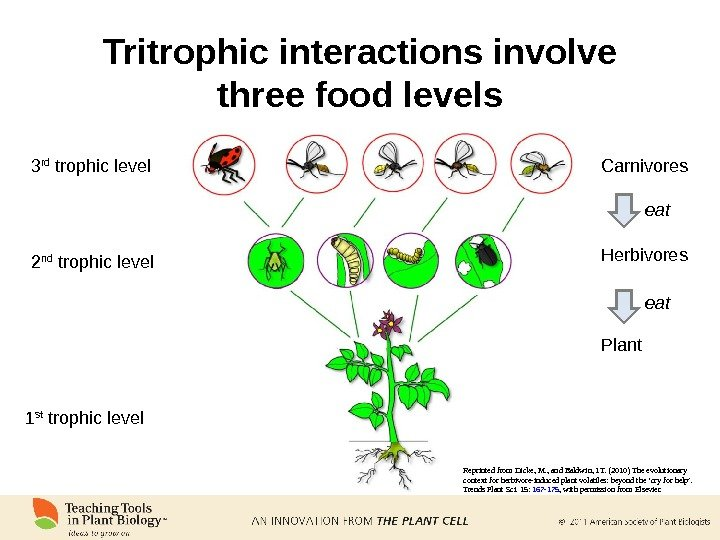Tritrophic interactions involve three food levels Carnivores Herbivores Plant eat Reprinted from Dicke, M. , and