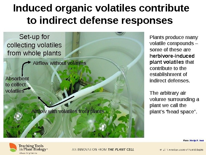 Set-up for collecting volatiles from whole plants Induced organic volatiles contribute to indirect defense responses Plants