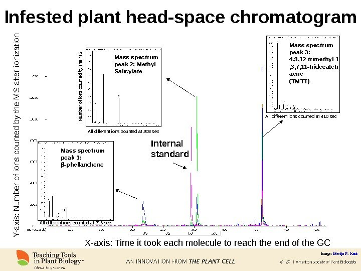 Infested plant head-space chromatogram Internal standard. Mass spectrum peak 1: β -phellandrene Mass spectrum peak 2: