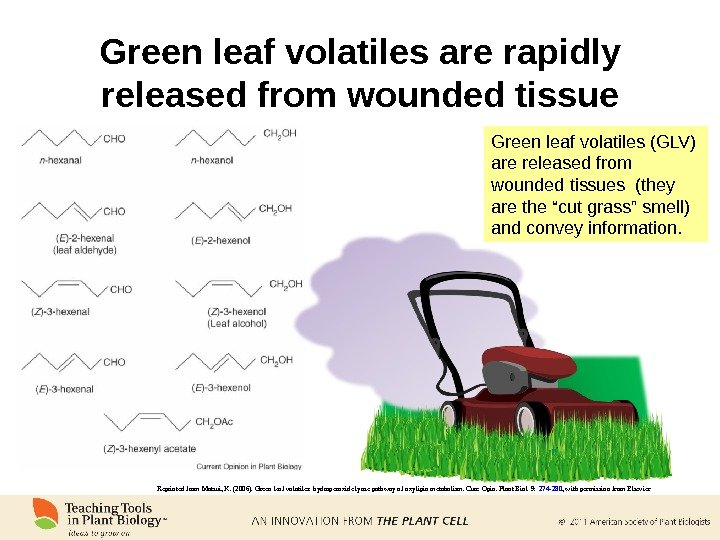 Green leaf volatiles are rapidly released from wounded tissue Reprinted from Matsui, K. (2006). Green leaf