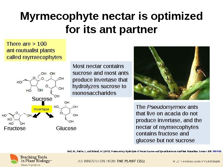 Myrmecophyte nectar is optimized for its ant partner Sucrose Fructose Glucose. Invertase Most nectar contains sucrose