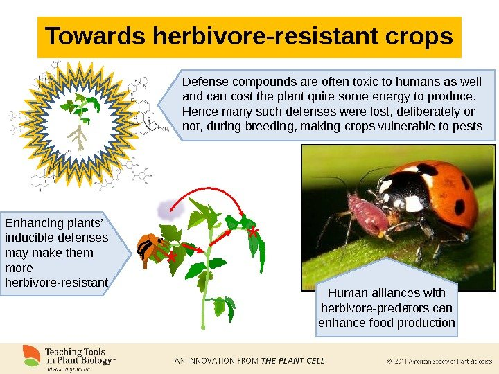 Towards herbivore-resistant crops Defense compounds are often toxic to humans as well and can cost the