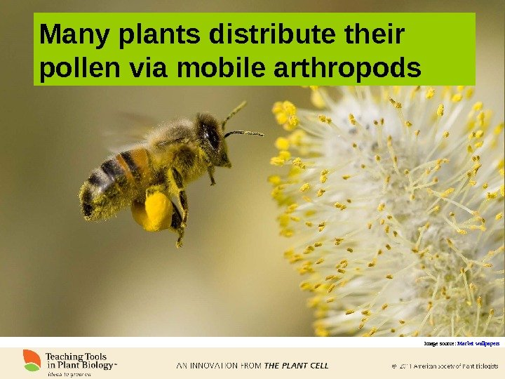 Many plants distribute their pollen via mobile arthropods Image source:  Market wallpapers
