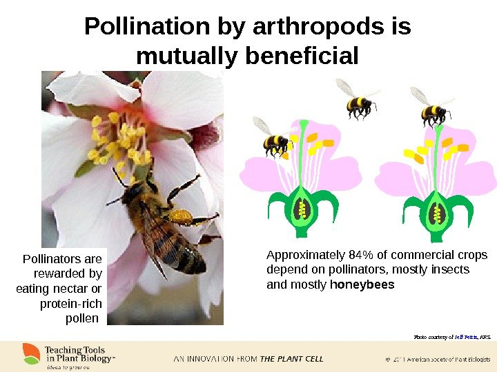 Pollination by arthropods is mutually beneficial Approximately 84 of commercial crops depend on pollinators, mostly insects