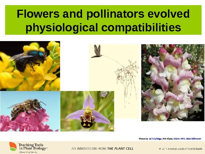 Flowers and pollinators evolved physiological compatibilities Photos by Jack Dykinga ; Rob Flynn,  USDA-ARS ;