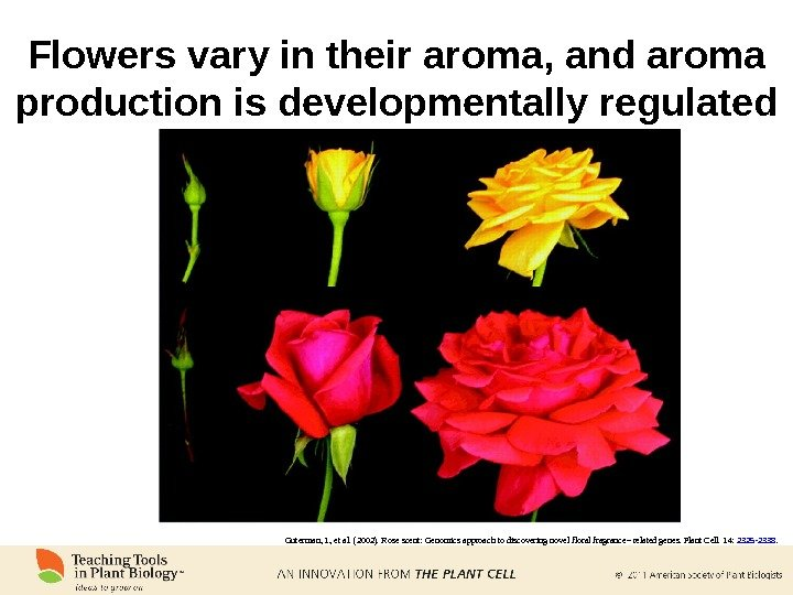 Flowers vary in their aroma, and aroma production is developmentally regulated Guterman, I. , et al.