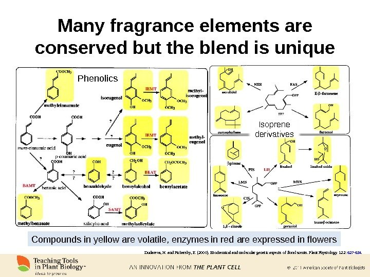 Many fragrance elements are conserved but the blend is unique Dudareva, N. and Pichersky, E. (2000).