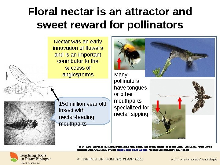 Floral nectar is an attractor and sweet reward for pollinators Nectar was an early innovation of