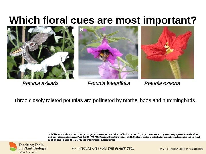 Which floral cues are most important? Hoballah, M. E. , Gübitz, T. , Stuurman, J. ,