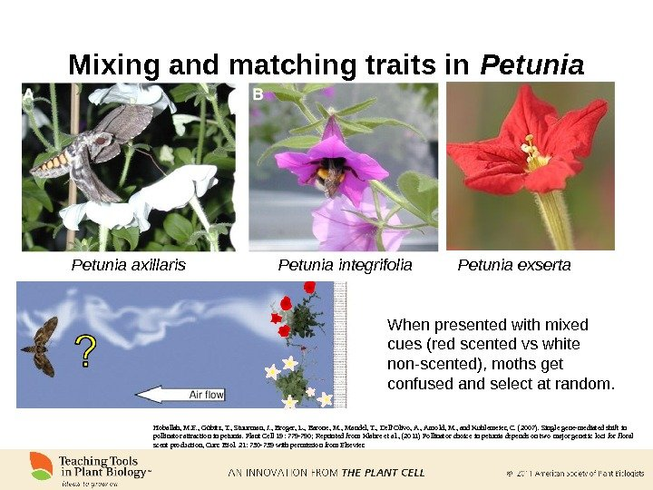 Mixing and matching traits in Petunia axillaris Petunia integrifolia Petunia exserta When presented with mixed cues