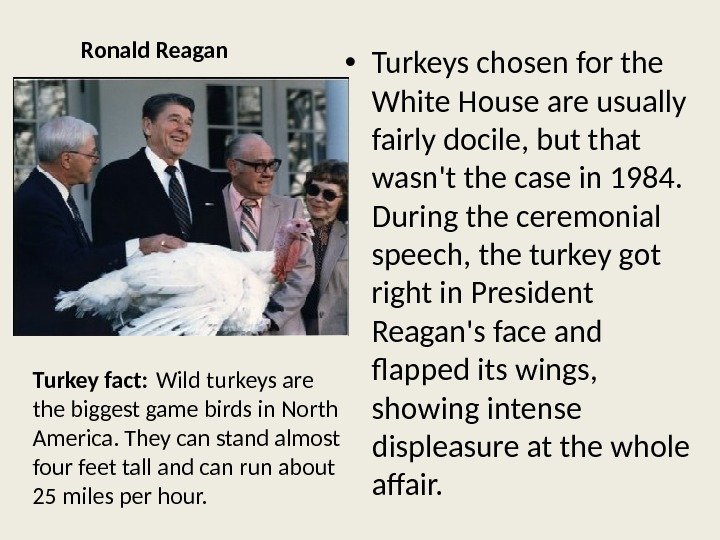Ronald Reagan • Turkeys chosen for the White House are usually fairly docile, but that wasn't
