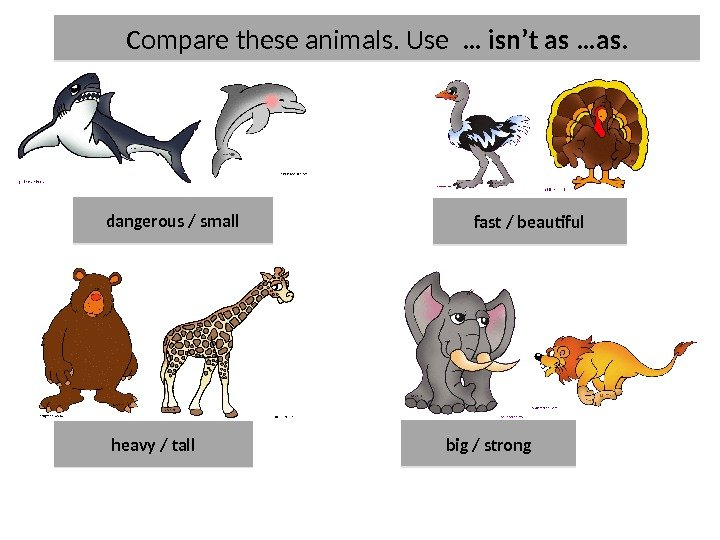 Compare these animals. Use  … isn't as …as. dangerous / small heavy / tall fast