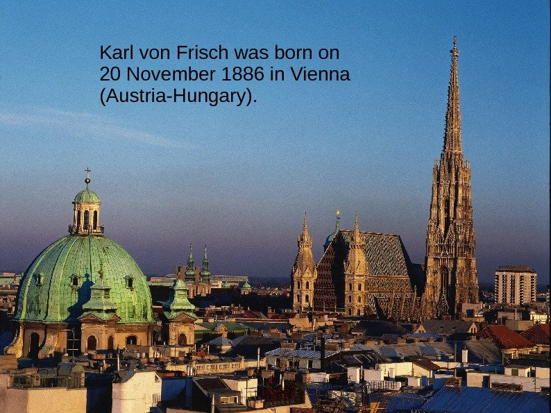 Karl von Frisch was born on 20 November 1886 in Vienna (Austria-Hungary).
