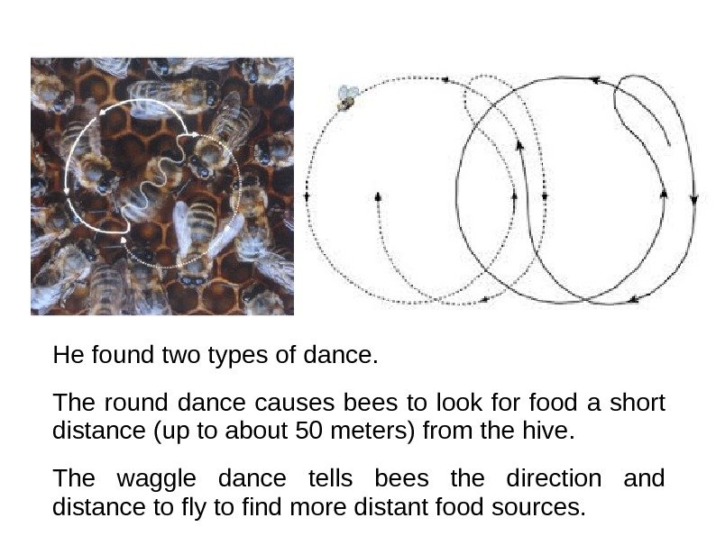 He found two types of dance.  The round dance causes bees to look