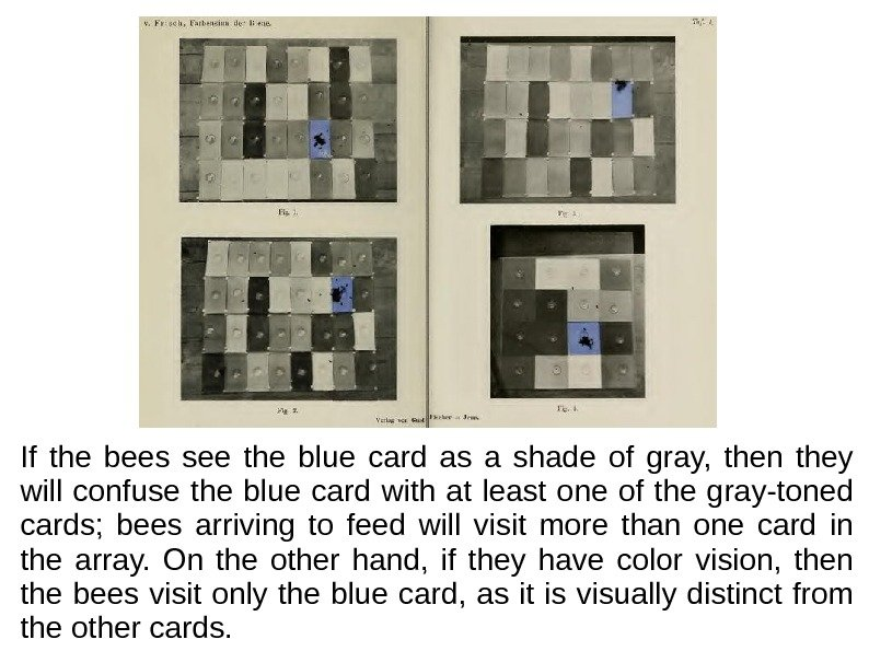 If the bees see the blue card as a shade of gray,  then