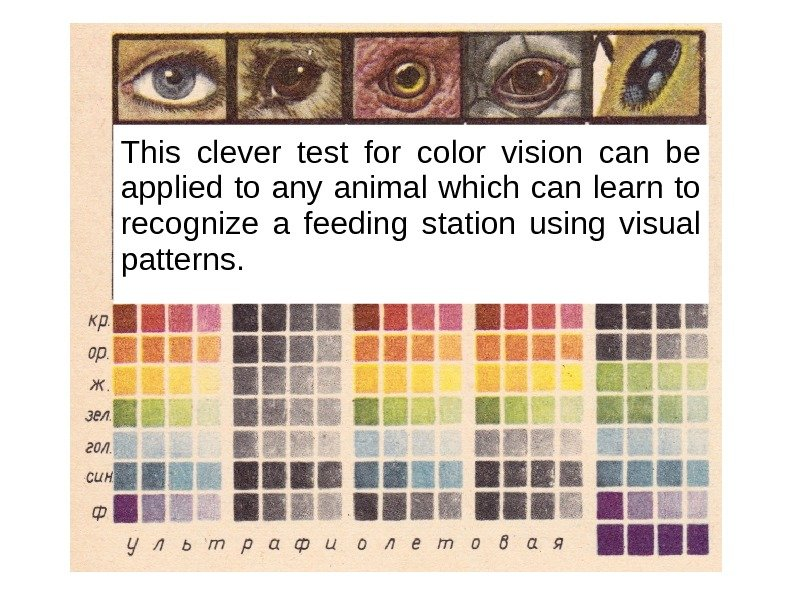 This clever test for color vision can be applied to any animal which can