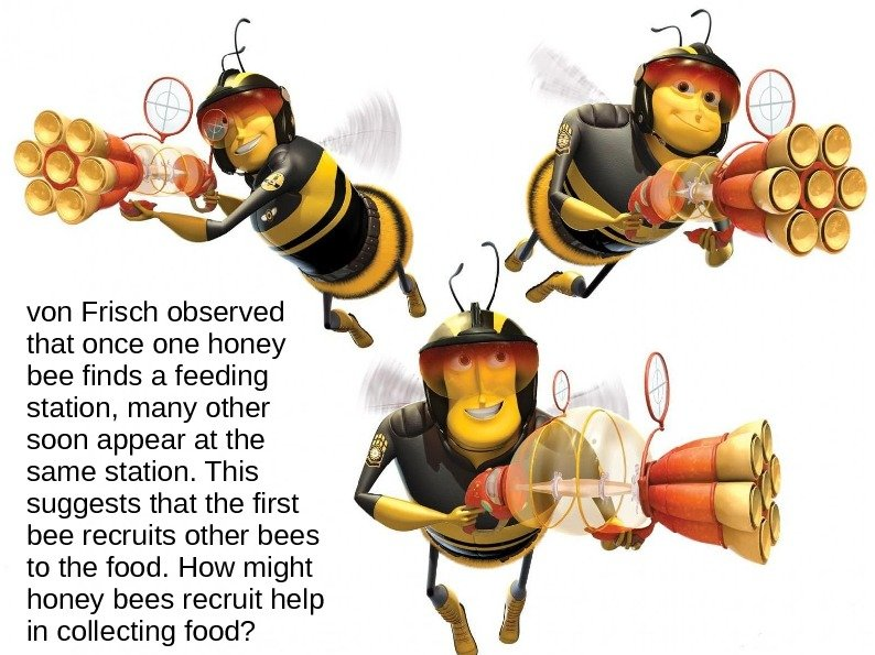 von Frisch observed that once one honey bee finds a feeding station, many other