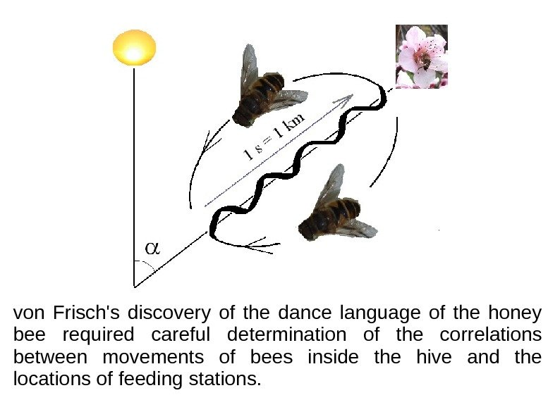 von Frisch's discovery of the dance language of the honey bee required careful determination