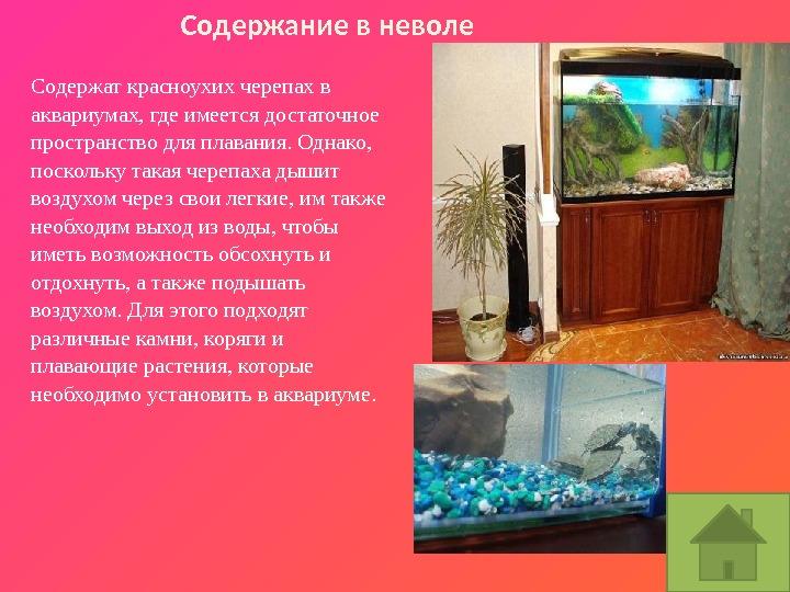 Рассказ про красноухую черепаху