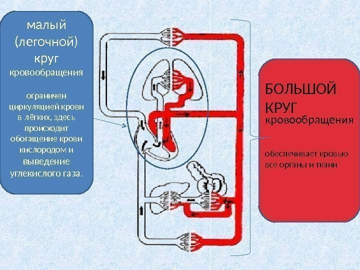 Как насытить кислородом организм в домашних условиях