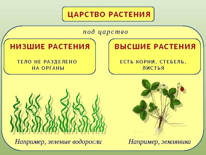 Характеристика растений схемы