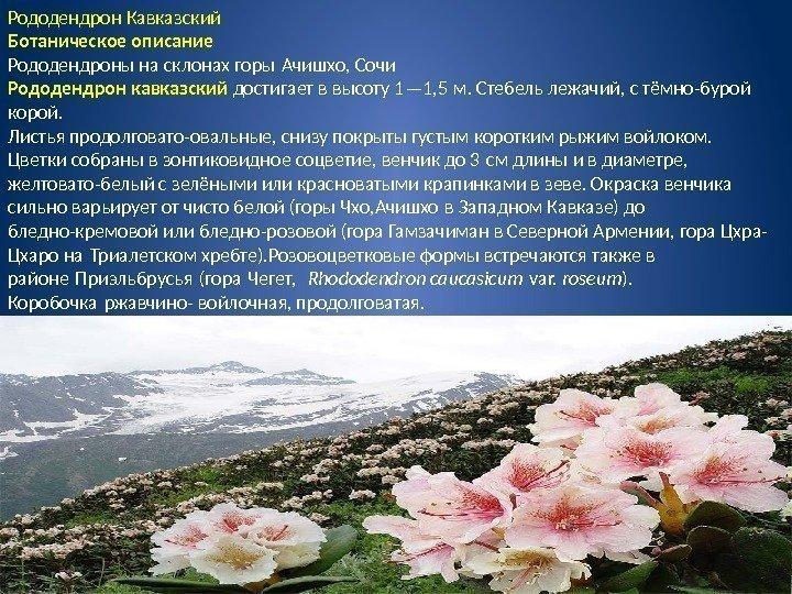 Общая характеристика вечнозеленых растений, их особенности ...